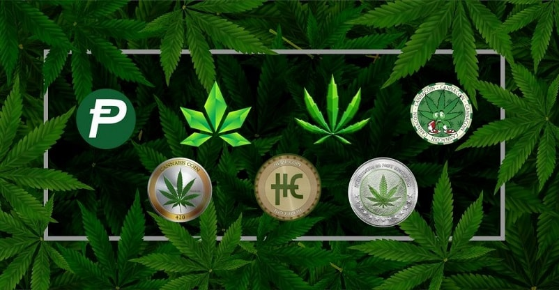 Which are the Top 5 Altcoins in the Cannabis Industry?